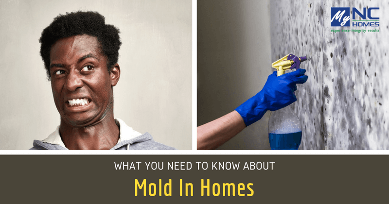 buying homes with mold and mildew